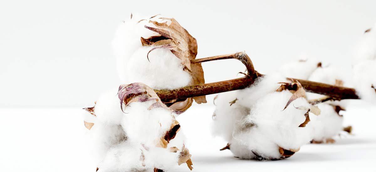 algodon-aznar-textil